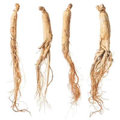 ginseng root illustration