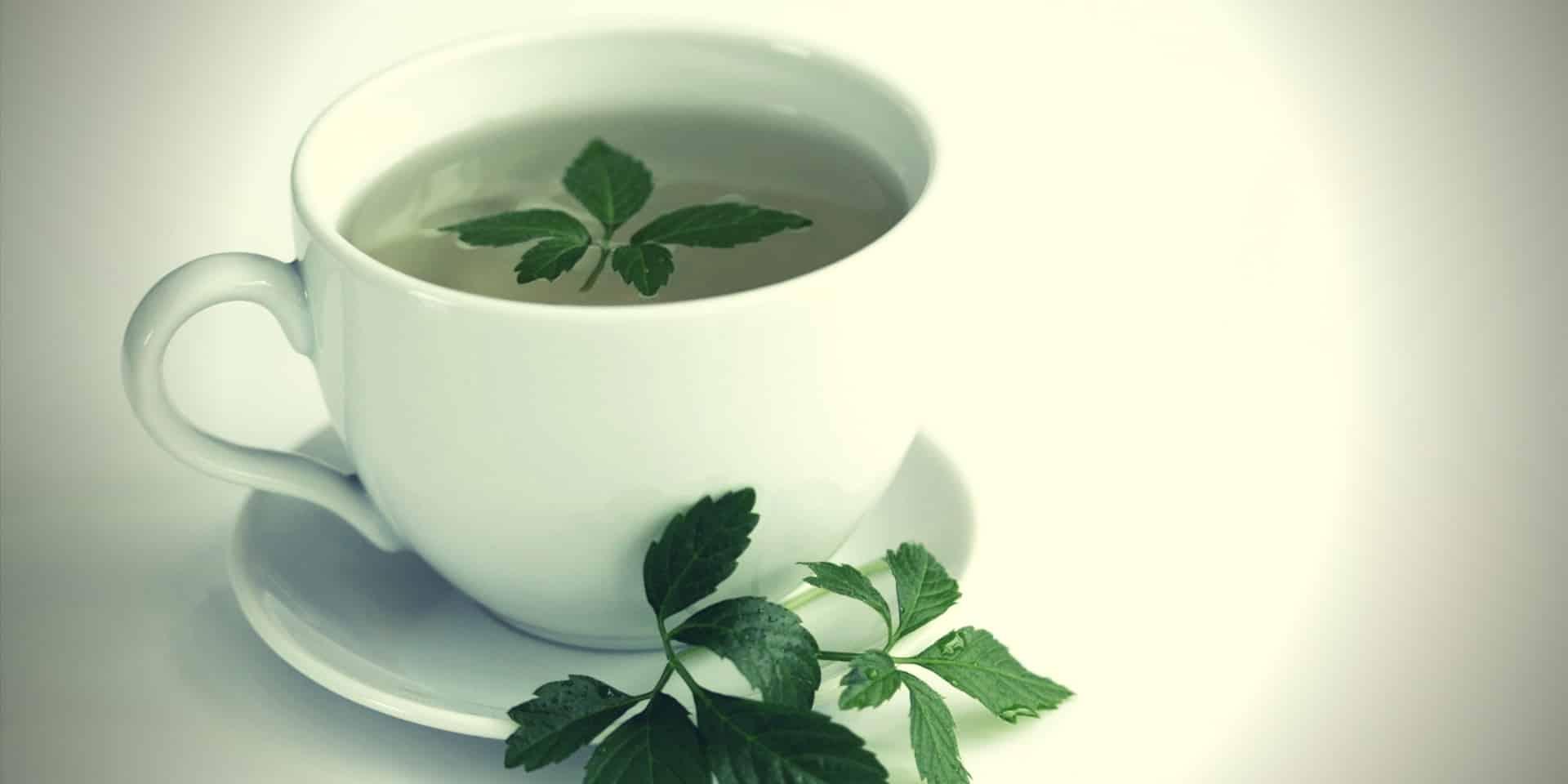 Gynostemma tea