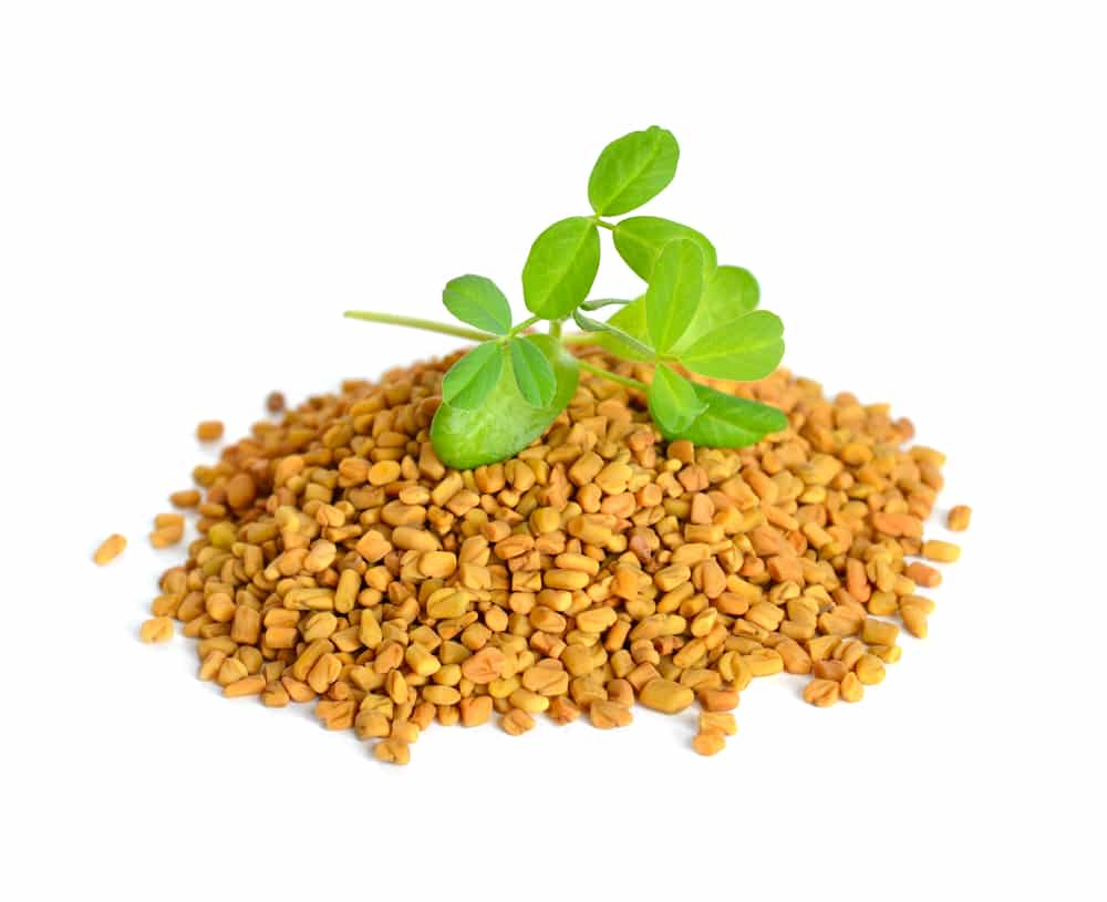 Fenugreek seed with sprout